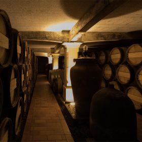 Vignoble; poitevin; medoc; jau; dignac; loirac; vin; chateau; nord; bordeaux; tourisme; oenotourisme; soulac;